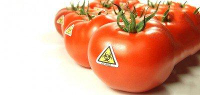 gmo_tomatoes_toxic_735_350-400x190