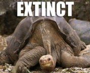 extinction of animal life on earth exceptional loss of