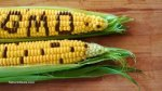 GMO-Concept-Corn-Spelled-Out-Husk-400x225
