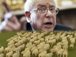 bernie-sheep