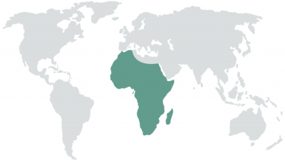map-africa-400x228 (1)
