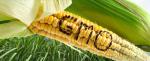 gmo-corn-word-735-300-735x300-400x163