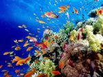 great-barrier-reef-holiday-reef-fish12-400x300