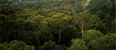 Amazon_Manaus_forest-400x172