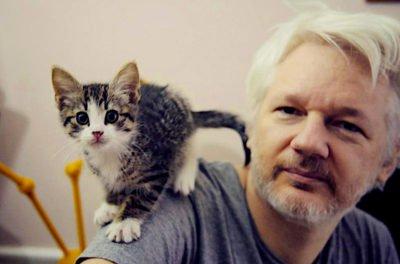 julian-assange-cat